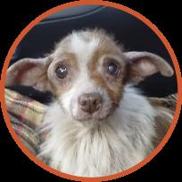 na interwencyjne odebranie i leczenie psa